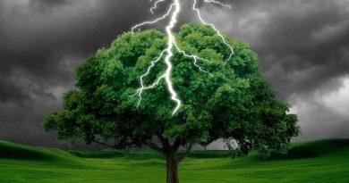 В какие деревья молния ударяет чаще всего