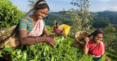Где в Индии можно купить настоящий индийский чай