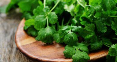 Применение кинзы и кориандра в кулинарии