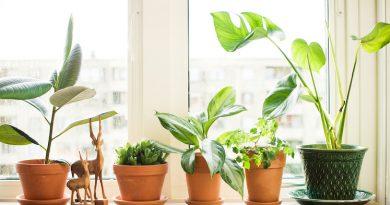 Как купить растения, которые правильно впишутся в комнату?