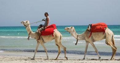 Главные минусы отдыха в Тунисе, которые могут испортить все путешествие