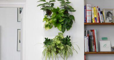 Размещение живых растений в комнате