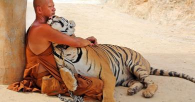 В чем привлекательность Тигриного монастыря Таиланда для туристов