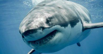 Акула откусила туристу ногу