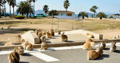Почему Испанию называют берегом кроликов