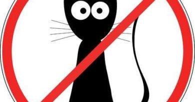 В каком городе жителям запрещено заводить кошек и почему
