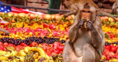 Странный пир для обезьян устраивают жители города в Таиланде