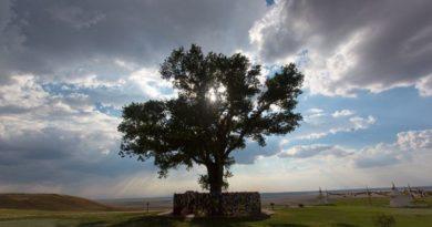 Тополь из России стал одним из лучших деревьев в Европе