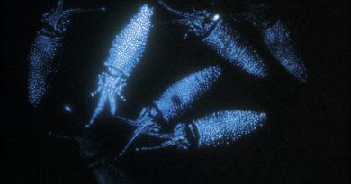 Почему некоторые организмы светятся в темноте?