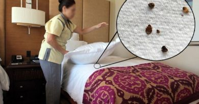 Как удостовериться, что в номере отеля точно нет клопов