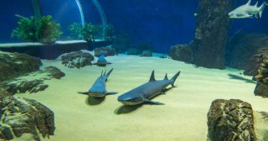 Подводная сказка Адлера: 5 причин заглянуть в новый океанариум