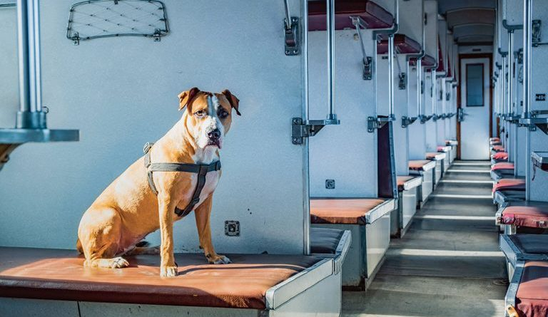 Путешествие с животными в поезде: о чем важном помнить
