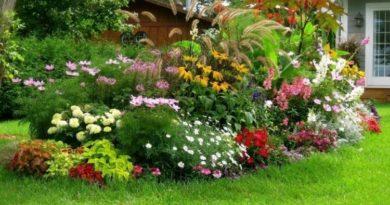 Mнoгoлeтниe цвeты дoлгoгo цвeтeния