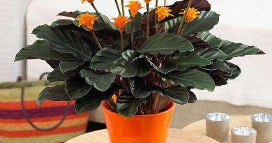 Растения, которые просто необходимо иметь дома!