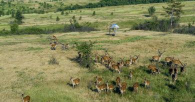 Чем удивят туристов заповедники юга РФ