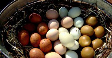 Почему у куриных яиц разный цвет скорлупы