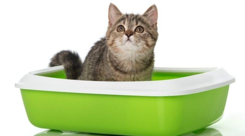 Как приучить кота к лотку быстро и без хлопот
