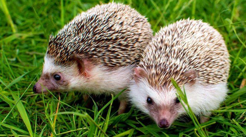 Не ведитесь на забавную мордочку: 10 опасных животных, которых мы считаем милыми и безобидными