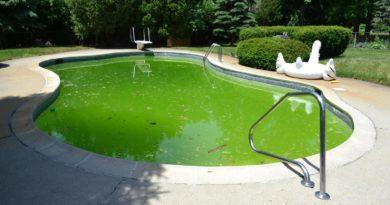 Зацвел бассейн: как бороться с цветением воды