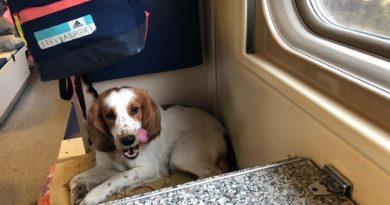 Как путешествовать на поезде с питомцами, чтобы не свести с ума попутчиков