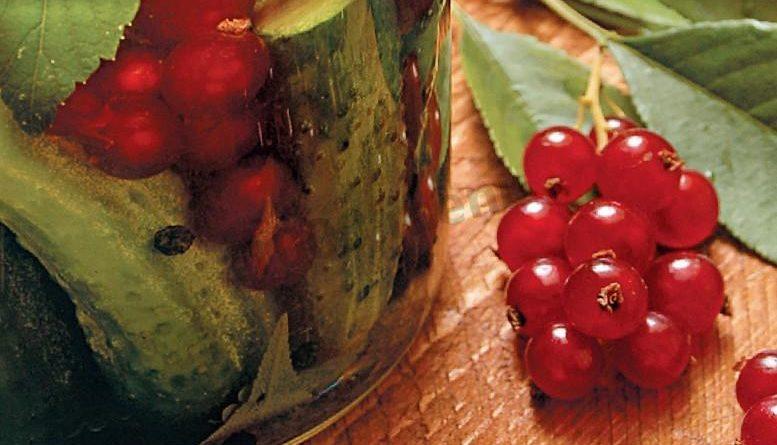 Необычный рецепт – маринуем огурцы в смородиновом соке