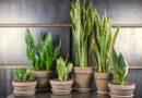 10 растений, которые стоит завести в доме, где слишком сухой воздух