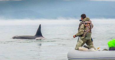 Отправляемся на встречу с китами на Шантарские острова