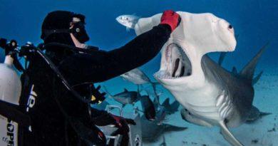 Опасности в океане, которые подстерегают дайвера