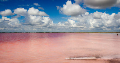 Бурлинское озеро: солёная драгоценность Алтая