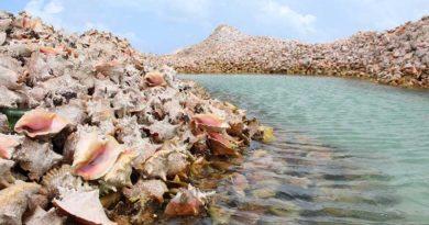 Удивительный остров на Карибах, состоящий сплошь из раковин