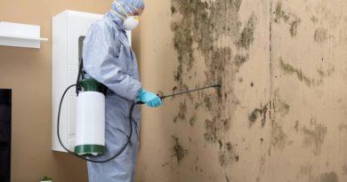 8 бюджетных средств помогут убрать плесень со стены и труб
