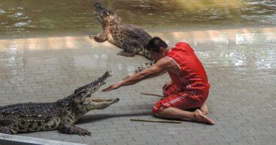 В чем секрет человека который кладет голову в рот крокодилу