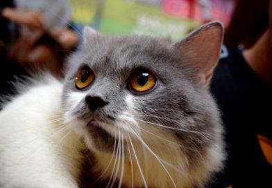 Специалисты назвали смертельную для кошек ошибку хозяев
