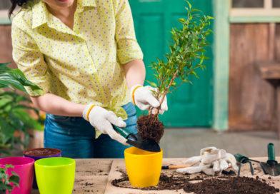 Садоводы рассказали, какие действия и привычки убивают урожай