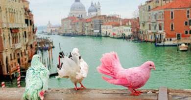 Самые интересные факты о Венеции