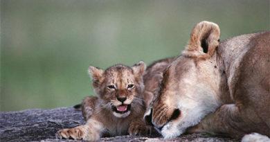 В мире животных: топ худших мам