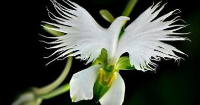 Необыкновенные цветы