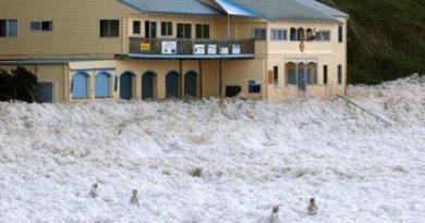 Прибрежный капучино - природный феномен из водорослей