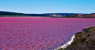 Розовое озеро Хиллер – самый загадочный водоём на Земле
