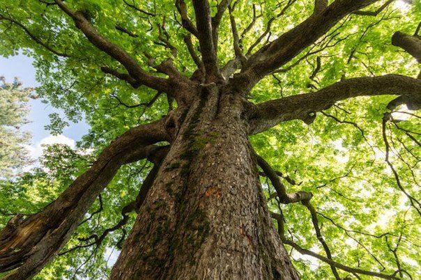 10 ошеломительных фактов о деревьях