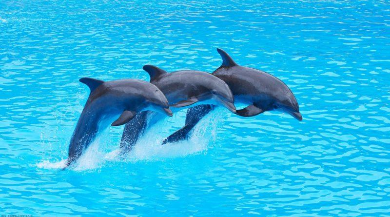 Почему акулы боятся дельфинов?