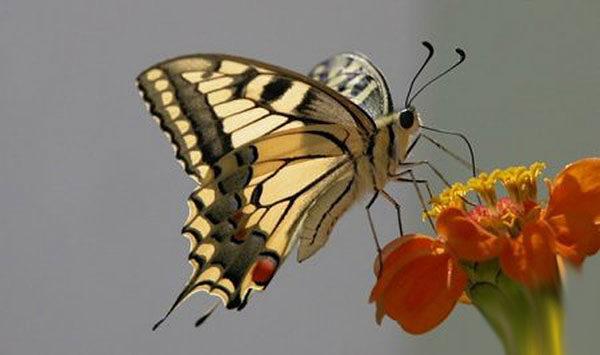 Эффект бабочки и что это значит