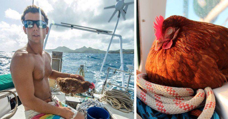 Француз совершает кругосветку в компании курицы