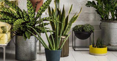 Как выбрать домашние растения?