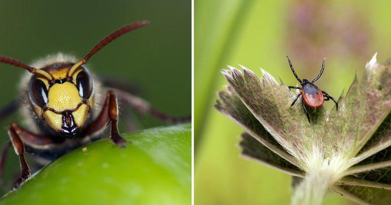 Шесть опасных насекомых России, встречи с которыми лучше избегать