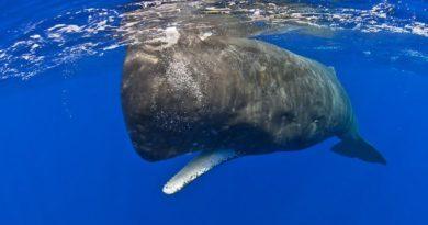8 фактов о Мировом океане и его обитателях
