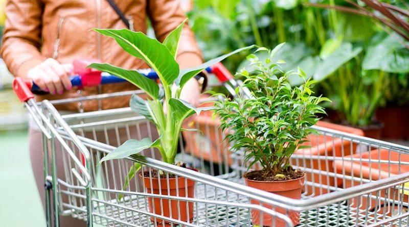 Как правильно покупать комнатные растения?