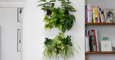 Как разместить цветы в квартире?