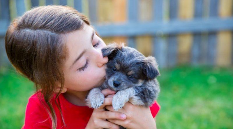 Мечтаете завести собаку? Эта статья для вас!