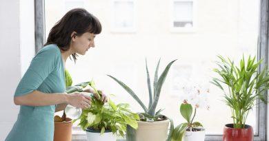 Несколько советов по уходу за комнатными растениями